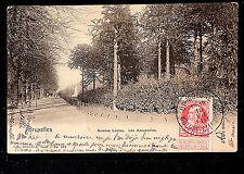 BELGIE 268.-BRUXELLES -1911 Avenue Louise. Les Araucarias.(Undivided Back)
