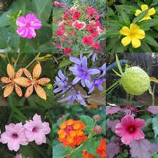 Assortiment de plantes tropicales faciles - lot de 100 graines