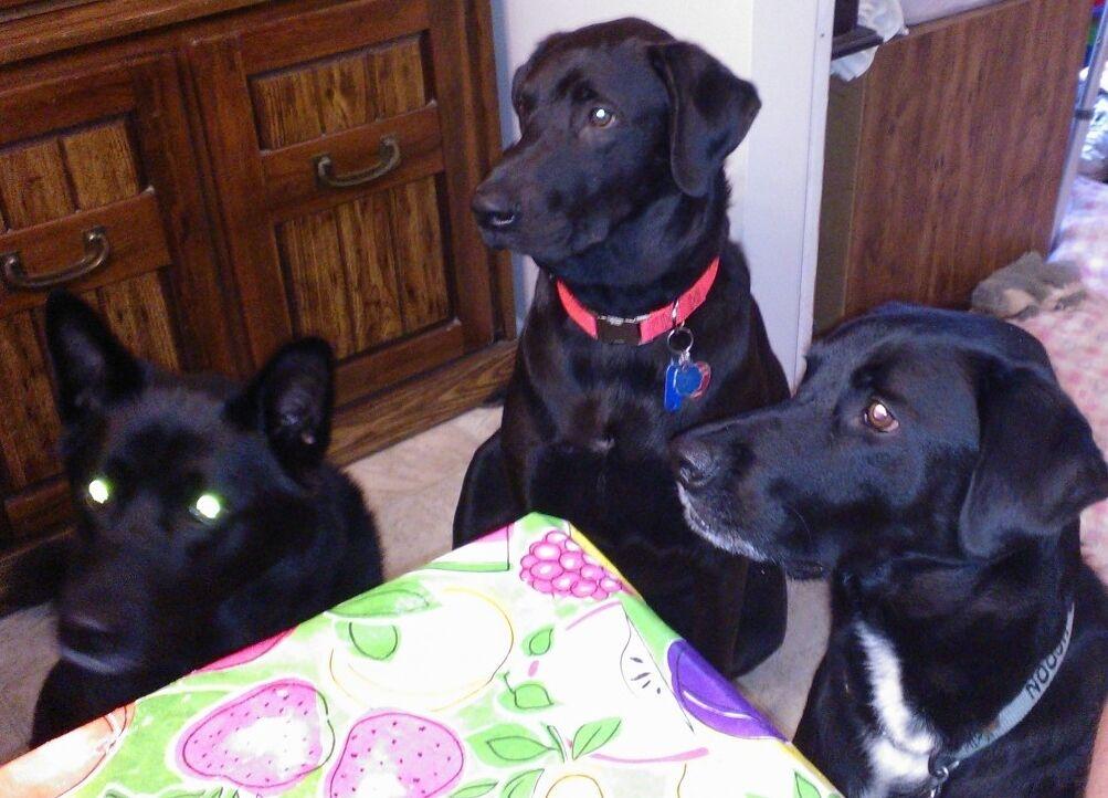 threedogscloseouts