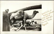 Sakkieh Water-Wheel Operated by Camel Nile River Egypt c1910 Amateur RPPC rtw