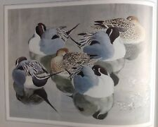 Pintail At Rest, Vintage Print By Tunnicliffe Beautiful Birds Can Be Framed - P2
