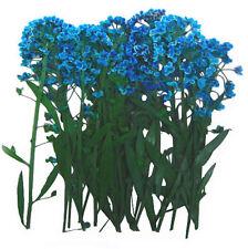 Pressed flowers, turquoise alyssum 20pcs for art, craft, scrapbooking