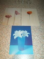 "NEW PICTURE POSTCARDS BUNDLE OF 7"" X 5"" DECORATIVE FLORAL 7in by 5in SET OF 3"