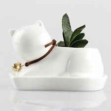 Cream White Small Cub Cat Ceramic Succulent Plant Flower Pot Flowerpot Planter X