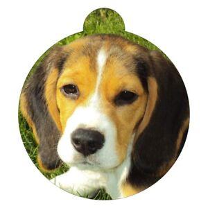 Beagle Rasse Bild Haustier Hundemarke