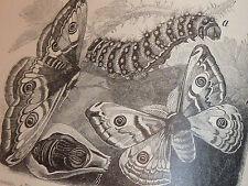 LIVRE ancien ANIMAUX croquis DESSIN pokornys naturgeschichte des tierreiches