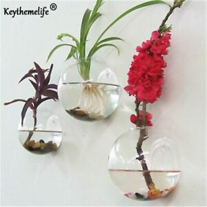 Glass Planter Round Shape Terrarium Wall Mounted Air Water Plant Hanging Vase