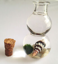 Baby Marimo Moss Ball Lucky Plant in Glass Bottle with Mixed Sea Shells