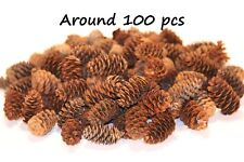 100 Small White Spruce Fir Pine cones Floristry Crafts Hobby Wedding Decorations