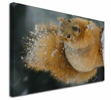 More details for red squirrel in snow x-large 30