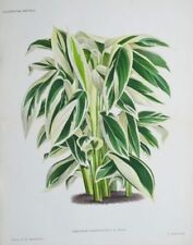 Lithograph Botanical Art Prints