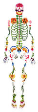 Human Skeleton Made from Flowers and Leaves Poster (Gothic Medical Picture Art)