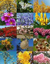 Flowering Trees Mix rare flower plant huge desert fragrant bonsai tree- 15 seeds