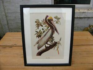 Vintage Audubon Print- Pelican 1950s MacMillan Framed ornithology birds