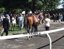 PALACE MALICE 8 by 10 PHOTO 2014 THE METROPOLITAN Horse Race BELMONT PARK #6
