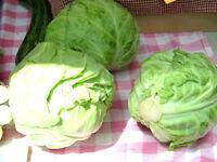 cabbage, DANISH BALLHEAD, 10 lb HEADS! 175 seeds! GroCo buy US USA