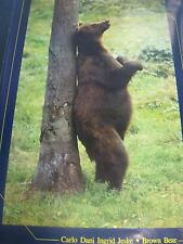 1996 Brown Bear nature by Carlo Ingrid Dani Jeske vintage poster PBX2102