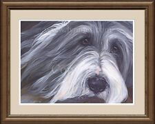 BEARDED COLLIE 'Ella' head portrait fine art dog print by Lynn Paterson