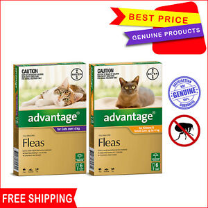 ADVANTAGE Cats Flea Prevention for Cats 6 Pipettes Monthly treatment FREE Ship