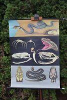 Carte à Rouler Schulwandkarte Carte Murale Ringelnatter Kreuzotter Schulkarte