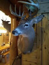 Whitetail deer head,Taxidermy,stuffed,mo unts,camp ,decor,outdoor,sports,ant lers