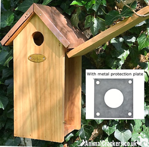 Copper Roof GREAT TIT wood Bird house nest box WITH METAL HOLE PROTECTION PLATE