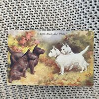 A Little Black and White! Scottish Terriers - Vintage Postcard