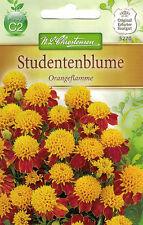 5270 Studentenblume 'Orangeflamme' Tagetes patula oranger Schopf Samen