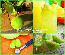 "SEEDS - Chinese Miniature Honeydew (Bailan melon) ""Cucumis melo"" Easy Grow!"