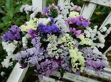 Dried Statice Sinuata Purple Pink White Lav. Mix 20 Stems Wildflowers Weddings