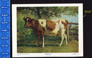 DOMESTIC COW, Bos taurus - 1902 Animal Print