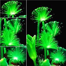 Emerald Fluorescent Flower seeds, Pearl Plants Aquarium Grass Seed Ornamental