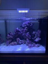 Salt Water Fish Tank With Coral Lights