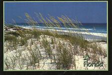 postcard   USA Florida  sea Oates   unposted
