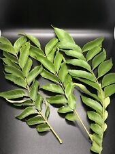Organic Indian curry leaves 35 Stems