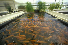 How to Raise Fish Farm CD 30 books Culture Farming Aquaculture Pond Hatcher DVD