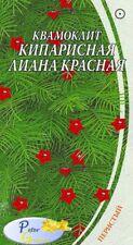 graines de Ipomoea quamoclit Lianel de cyprès rouge - Quamoclit - Star glory