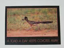 "Texas Postcard ""A Toad A Day Keeps The Coyotes Away"" - Unposted"