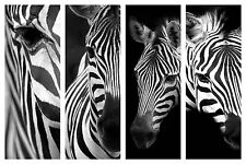 "STUNNING ZEBRA WILDLIFE CANVAS COLLAGE #2 QUALITY CANVAS PICTURE 30""X20"""
