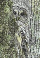 BROWN OWL # 4 - COUNTED CROSS STITCH CHART