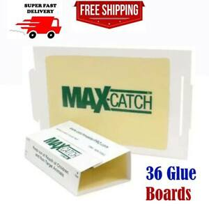 Mice Glue Traps Pest Sticky Boards 36 Pcs Trap Catch Spiders Snakes Insects Rats