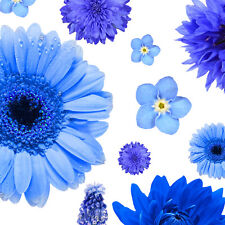 Blue Color Shades Wild flowers Approximate 100 seeds *easy grow* garden CombSH