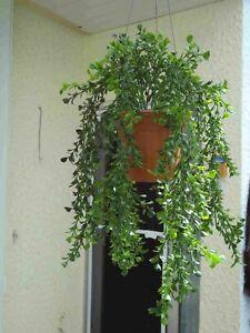 künstlichepflanzen bäume blumen deko Buchs-Ampel  künstliche Blumen 60cm