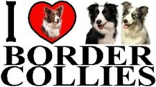 I LOVE BORDER COLLIES Car Sticker By Starprint - Featuring the Border Collie