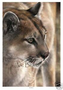 Tohon, Limited Edition Print, Mountain Lion, Cougar, by Vic Bearcroft