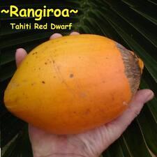 ~RED TAHITI RANGIROA~ Dwarf COCONUT Cocos nucifera Haari Papua SPROUTED SEED