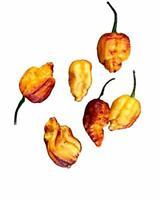 Chili Pockmark 'Orange' 10 Samen -Seltene sehr scharfe Schönheit Chilisamen
