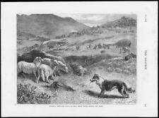 1874 - Antique Print WALES Bala National Sheep Dog Trials Penning Horses  (140)