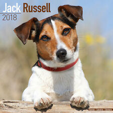 Calendrier 2018 - JACK RUSSEL