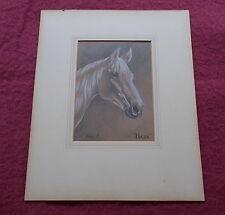 HEAD OF ARAB HORSE PENCIL CHALK DRAWING BY ALICE BARNWELL ARABIAN HORSE DRAWING